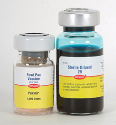 F-1-3 POXINE VAC: 1000 Dose For Older Birds
